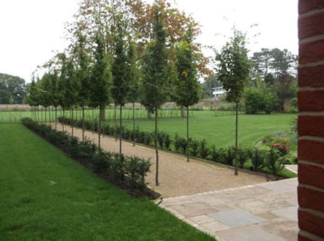 Classic plantings of English yew, hornbe