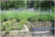 front garden in Halebarns.jpg