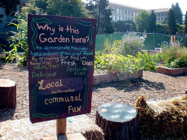 A community garden on campus at UC Berkely. Photo by Hfordsa
