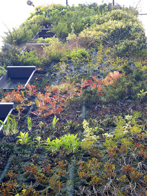 This greened wall, or 'living wall', is on the side of a London hotel. Photo by Rev Stan.