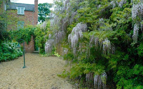 Cheshire Country Garden wisteria.jpg