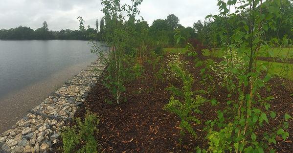 The Wraysbury Nature Reserve.jpg