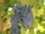 Kakheti wine testing tour