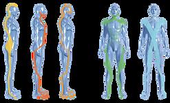 Chaînes musculaires kinésithérapie