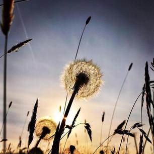 Tick tock meadow