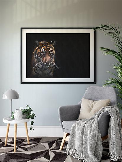 Sumatran Tiger - Conservation Collection