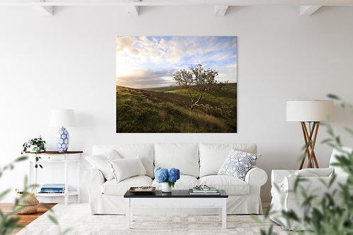 Mountain Ash Landscape