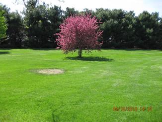 Pretty tree blooming.jpg
