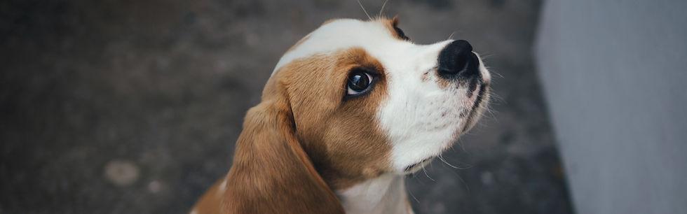 Puppy-School.jpg