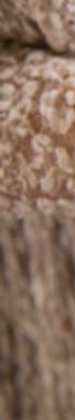 Screen Shot 2020-03-26 at 1.41.09 PM.png