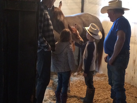 Grandkids Meeting the Foals