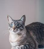 portrait-beautiful-domestic-cute-cat-wit