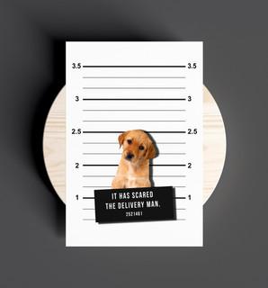 Prisoner Dog Design