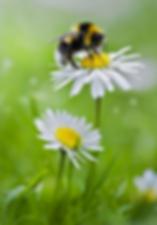 abeille copie.png