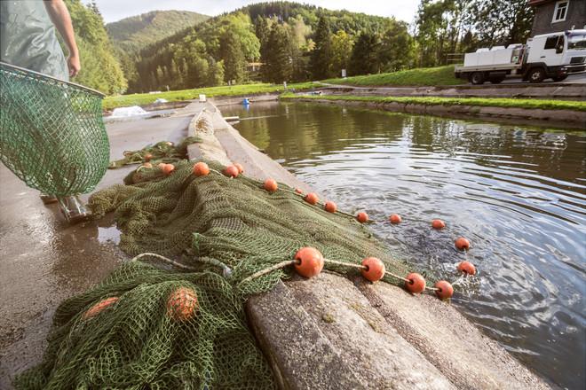 Fischzuchtteiche 1.jpg