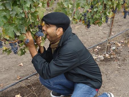 Meu início no mundo dos vinhos