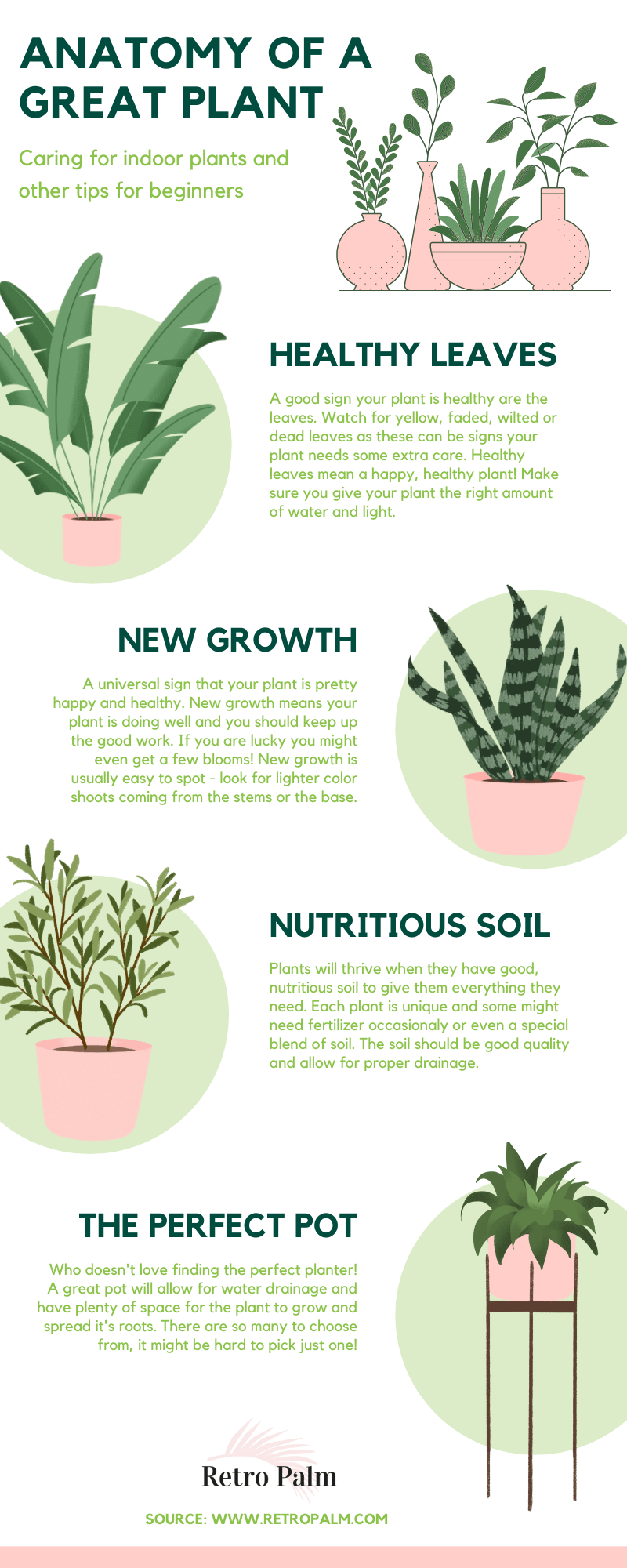 great plants have healthy leaves, new growth, nutritious soil and a good pot.