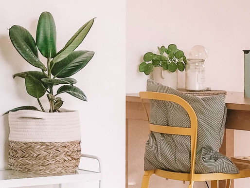 Tropical Plants to Decorate Your Home With This Summer