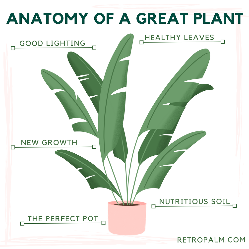 five key factors that tell you if your plant is happy