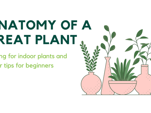 The Anatomy of a Great Plant - Caring for indoor plants and other tips for beginners