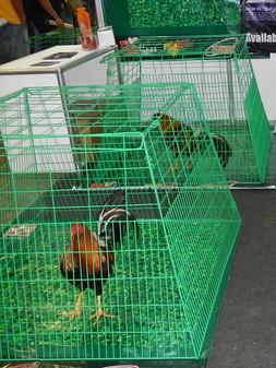 Chicken cage.JPG