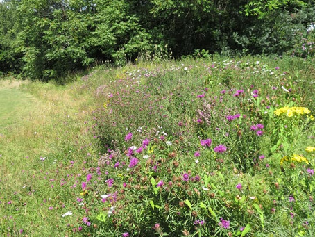 Butterfly and Bee Bank Maintenance