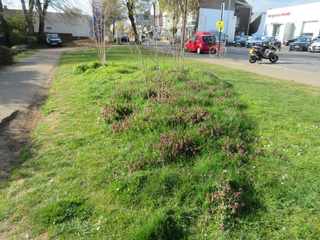 Roadside Verges are getting more biodiverse!