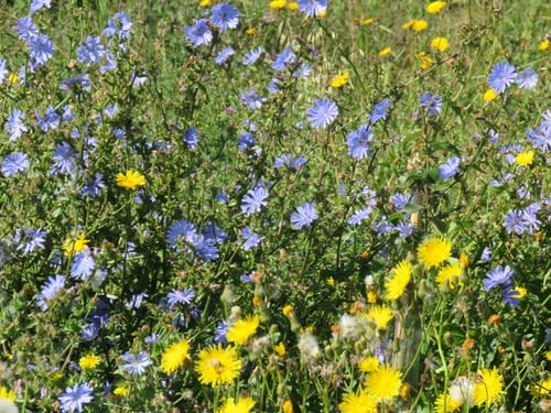 How to make a wild flower patch in your garden