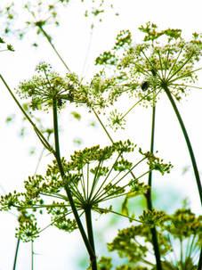 FLOWERS TEGENLICHT.jpg