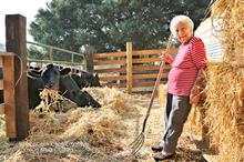zz 00 Elsie with cows 0E2A4191.jpg