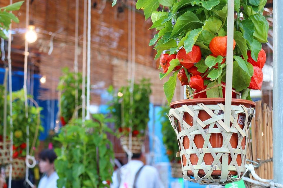 Hanging gardenparty