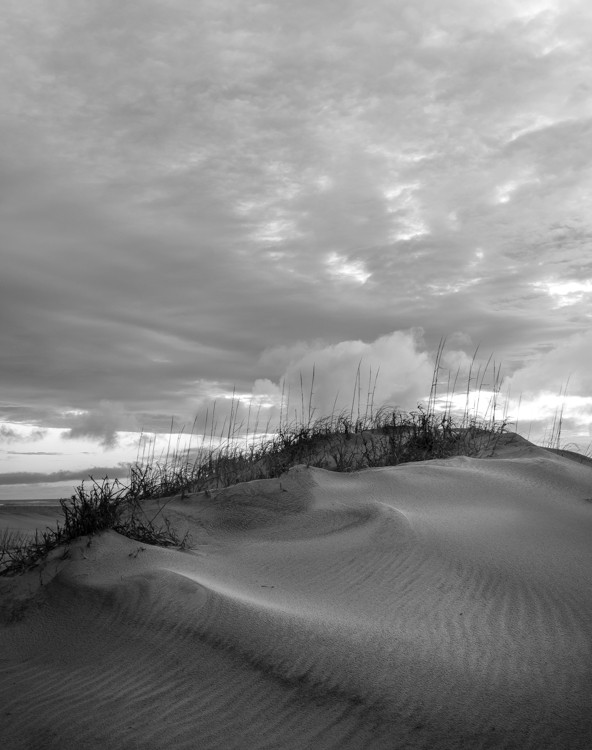 Dune Field