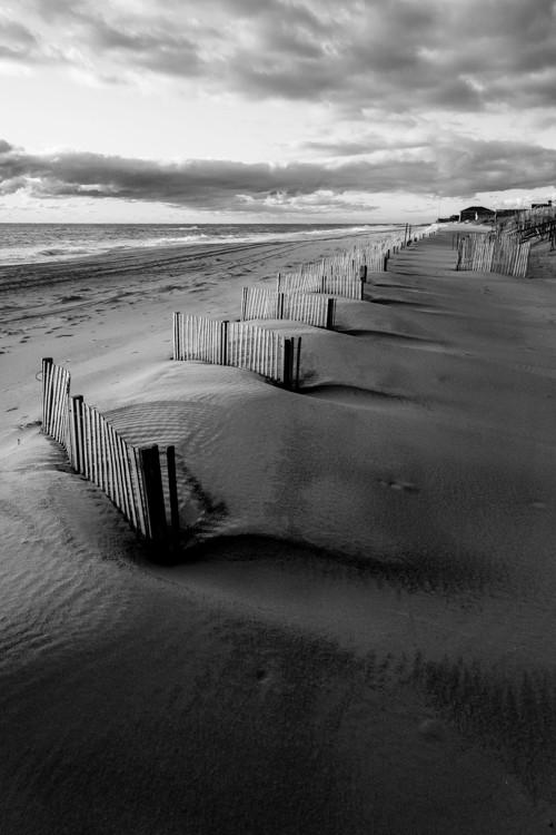 Sand Fence Row