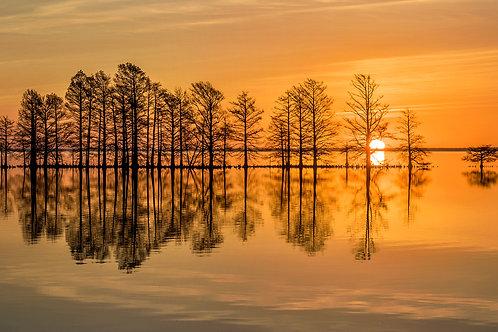 """Lake Mattamuskeet Sunrise"""