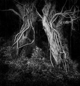 Social Distancing in Nags Head Woods