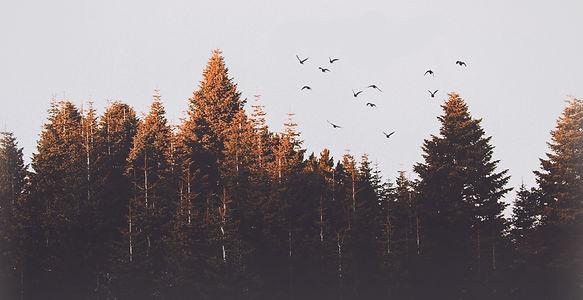 woodsman landscape copy.jpg