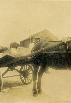 Vic Sadler delivering with horse & cart