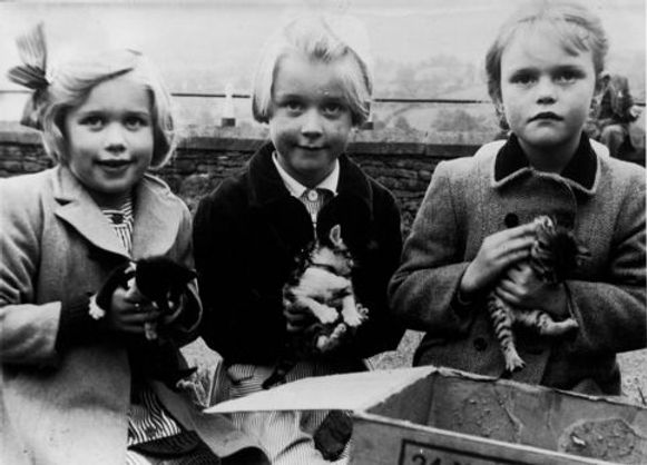 Thoralby Village Green: 3 girls sold their kittens