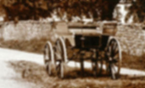 Lodge family dog cart, 1890s, courtesy of Clive Torrens