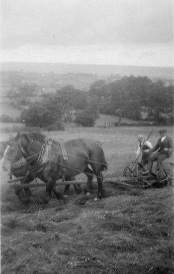 Double-horse mower, Newbiggin 1930s
