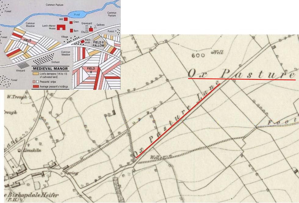 Medieval  Manor & Ox Pasture Lane & Ox P