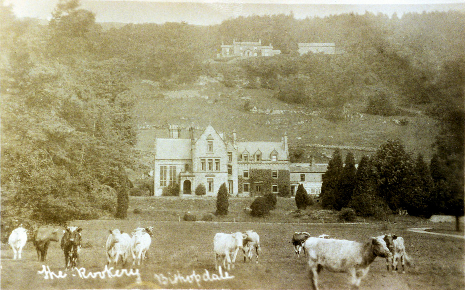 Close up of the magificent Rookery and Scar Top Farm on the hill top, dairy shorthorns in the foreground. Courtesy of Ann Holubecki.