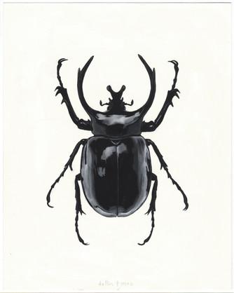 beetle study 01