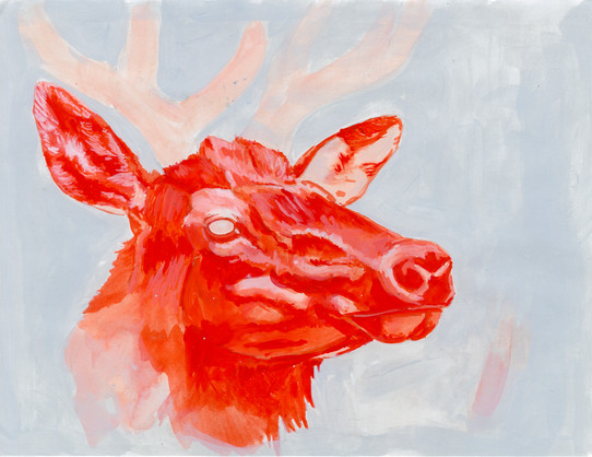 red elk study
