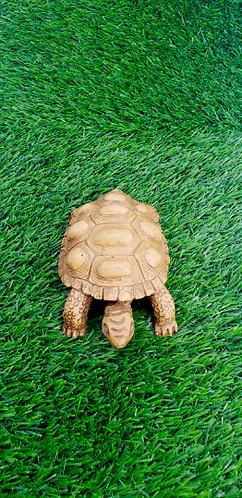 Handmade Turtle Statue from Nepal, Turtle, Goodluck Gift, Abundance, Fertility,