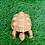 Thumbnail: Handmade Turtle Statue from Nepal, Turtle, Goodluck Gift, Abundance, Fertility,