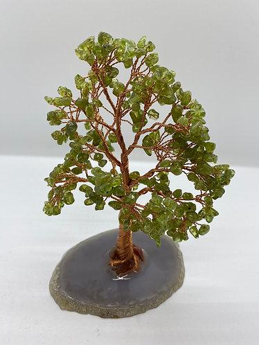 Peridot Prosperity Bonsai Tree