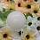 """Thumbnail: Selenite Sphere, 75mm Selenite Crystal Ball,3"""" Selenite Cleanse Gemstones,Calmin"""