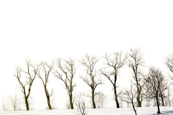 02 Iced Fields 017.jpg