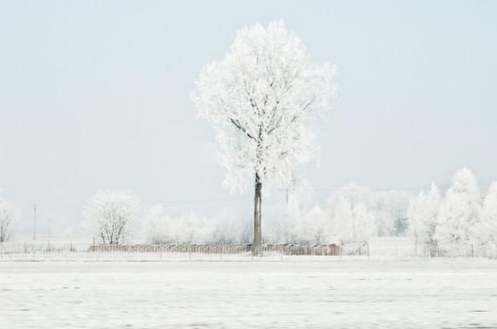 02 Iced Fields 002.jpg